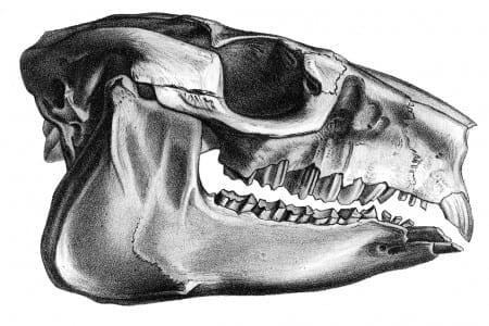 Hegetotheriidae