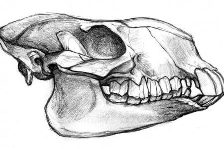 Notohippidae