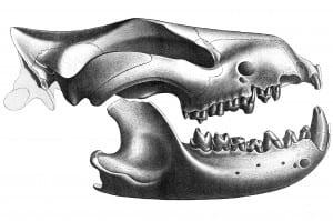 3.0 Sparassodonta
