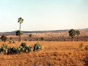 Palms and Termite Mounds